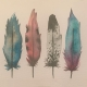 Feathers illustration - private client
